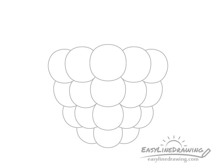 Raspberry bottom drupelets drawing