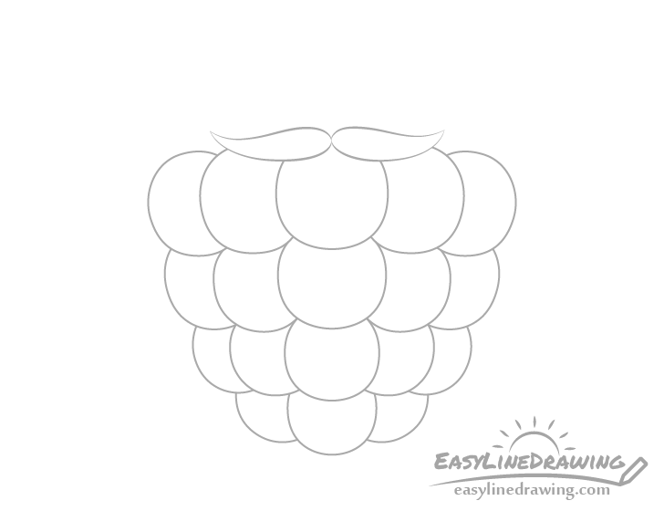 Raspberry front sepals drawing