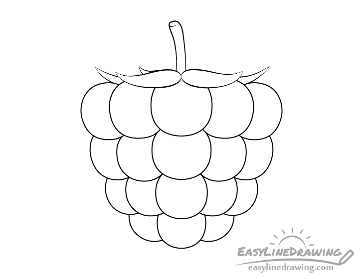 Raspberry line drawing