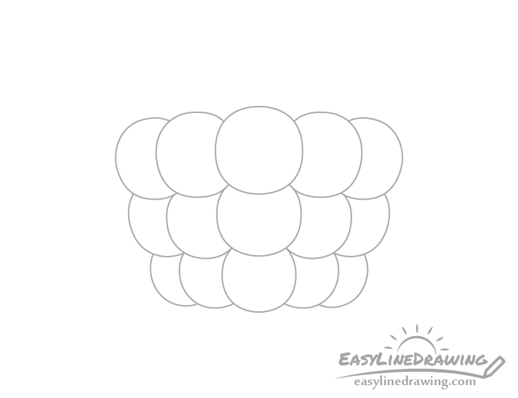 Raspberry middle bottom drupelets drawing